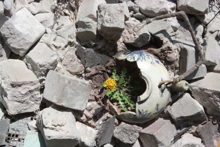 Broken teapot in rubble with dandelion growing out of it